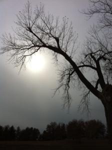 Winter's Solstice